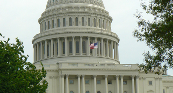 The U.S. Capitol Building is seen framed by some green bushes and a tree.